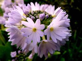 ~ Flower in my garden by purplepacific