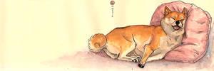 sleeping shiba