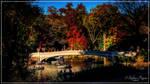 Central Park IV