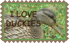 I Love Duckies Stamp by Tangerineandpuce