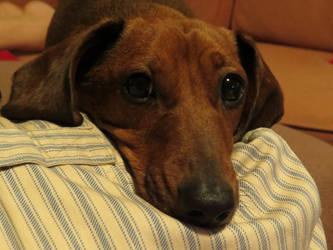 my dog tim by tezzy-101