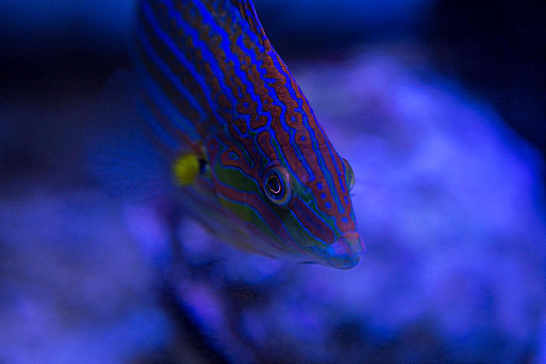 Very Fishie by GlenRoberson