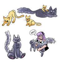 Cats by media-rama