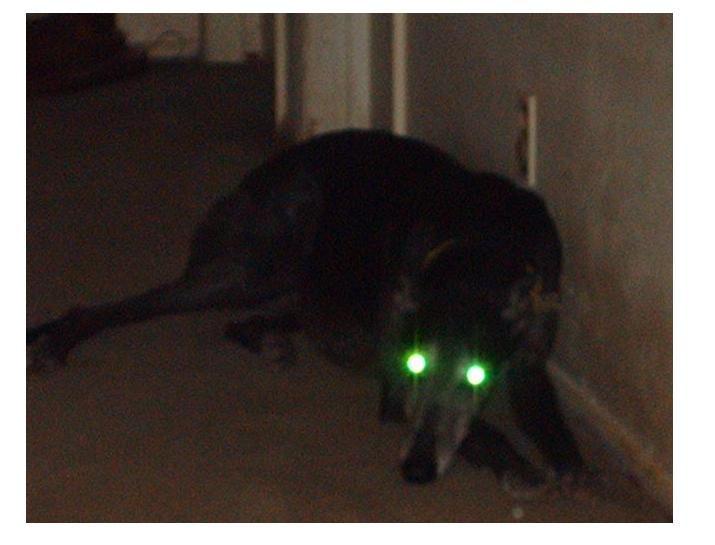 Glowing eyes by 4biddendonut