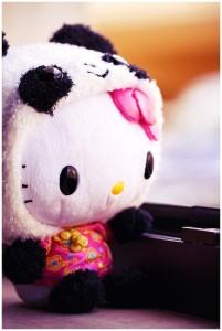 kuma-panda's Profile Picture