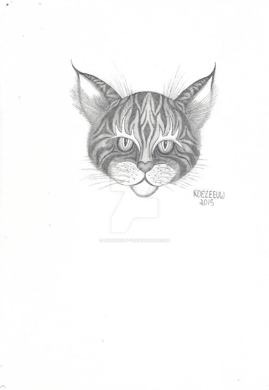 Cat by Dragonfly-V