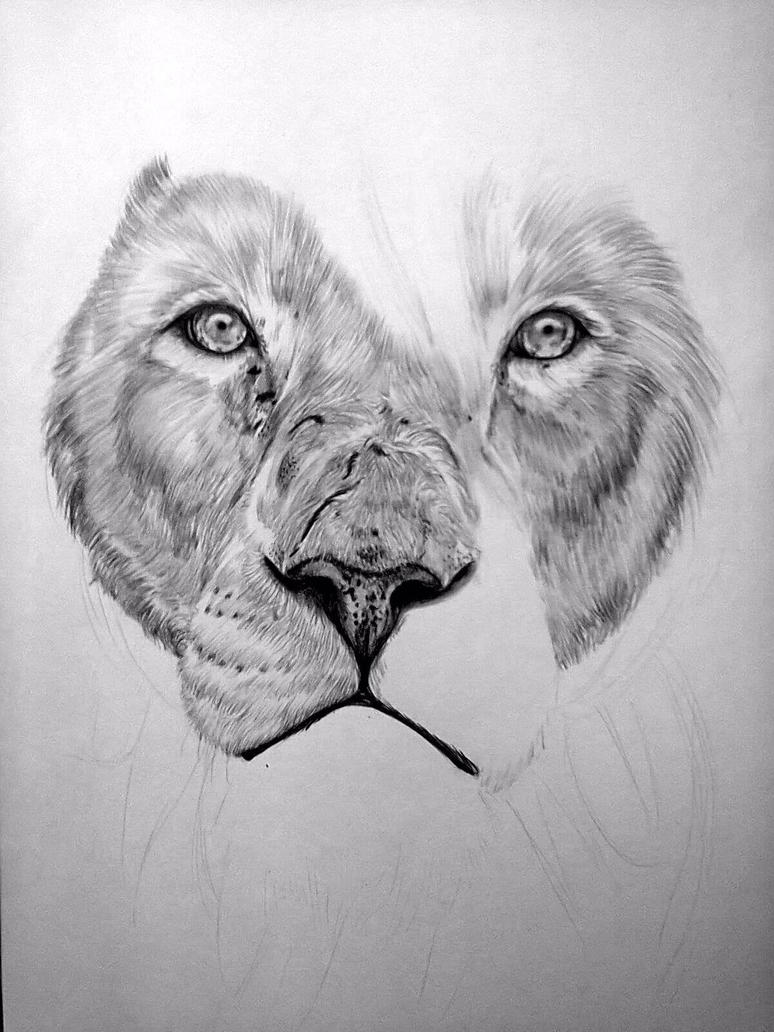 Cool Drawings Of Lions | www.imgkid.com - The Image Kid ...
