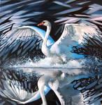 Swan by Rpriet1