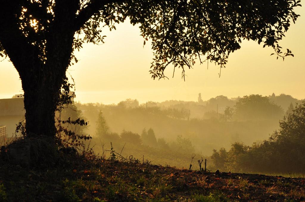 golden sunrise by marlene-dietrich