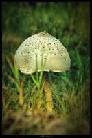 Mushroom by mdfoto