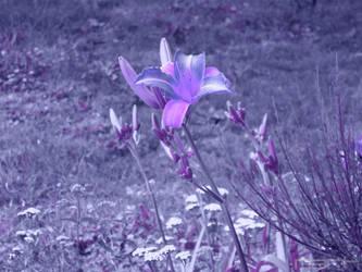 purple flower by markcassar