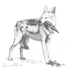 Canis Adustus by MuraART