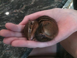 Real Life Alvin?