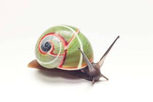 Good looking snail