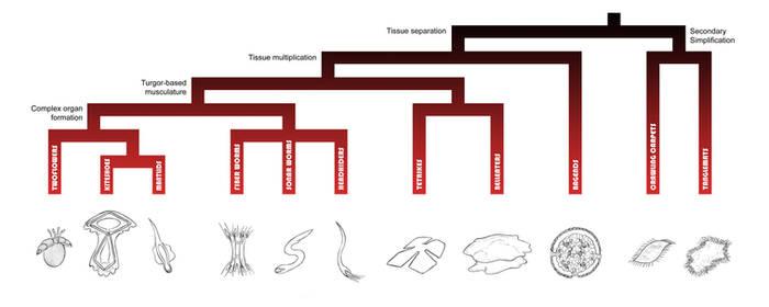 Zainterian Tree of Life - Koilozoa by Zerraspace