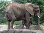 Stock - Elephant - 04