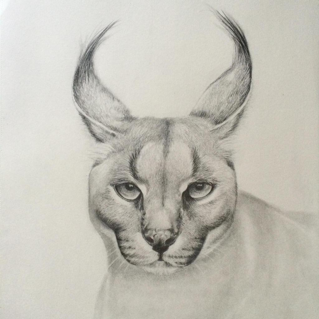 Caracal by sindisj
