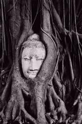 HEAD OF THE SANDSTONE BUDDHA. by JOVIAGRA