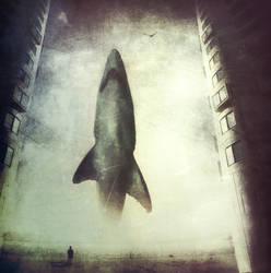 Shark Photomanipulation Contest