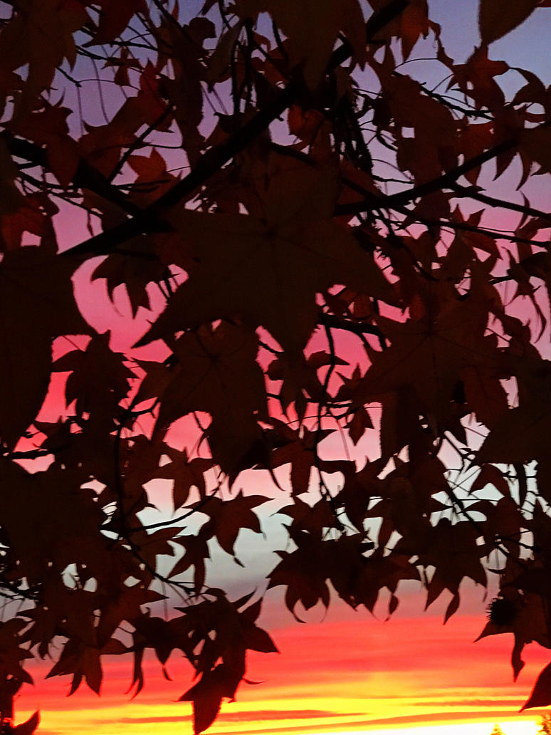 Maple at sunset by Agatha-Tyche