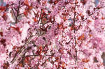 Constant Bloom by badpicsofbugsetc