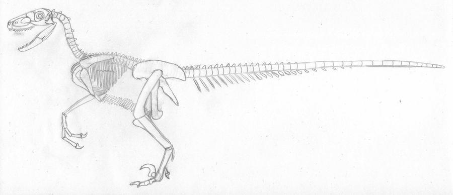 900 x 388 jpeg 38kBVastatosaurus