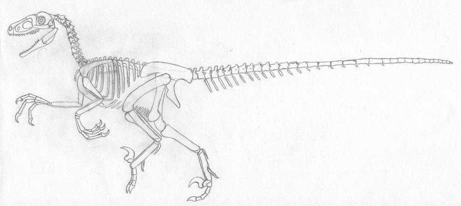 Jurassic Park Raptor Skeletal 20 By Dotb18 On Deviantart