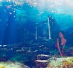 Ruins Under the Sea/ Ruinas Bajo el Mar