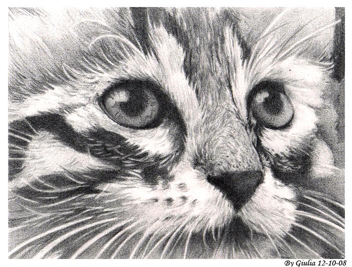 Cat by Bersi-Chan