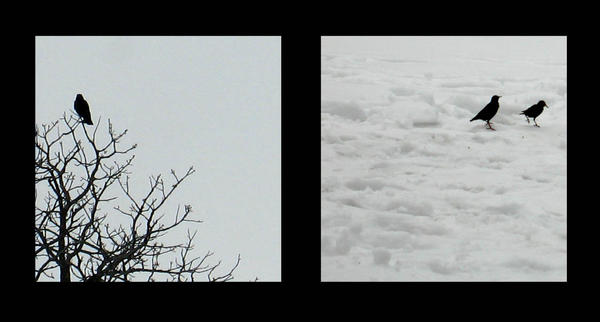 Winter- Study in Contrast by margin-madrigal