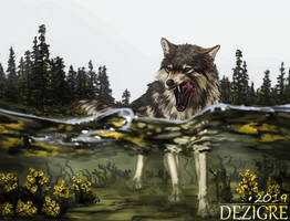 Wolf and Water
