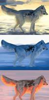 Arctic foxes - color study