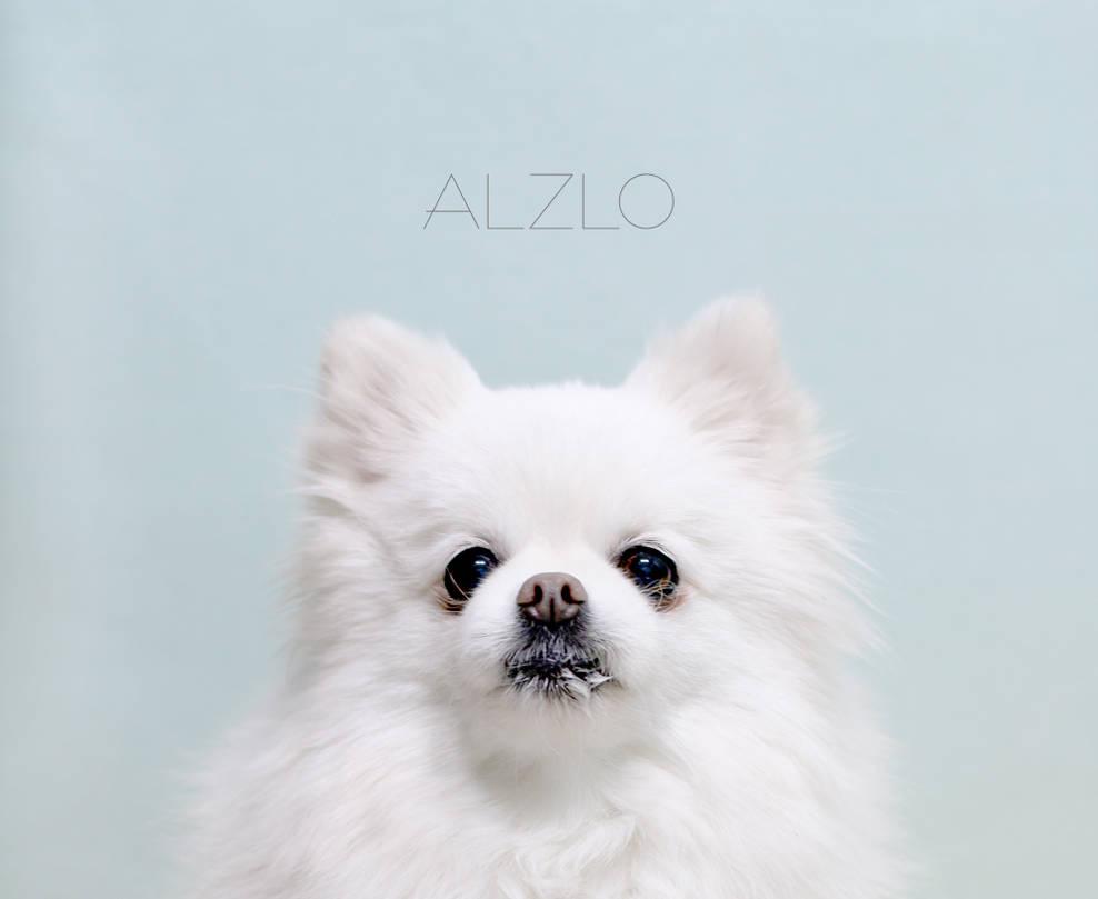 dog / Pomeranian / animal by dalpong