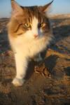 Chronos at beach 3