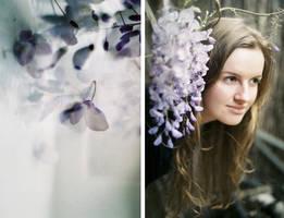 .wisteria