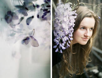 .wisteria by dippedFEATHER