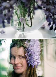 .wisteriaa