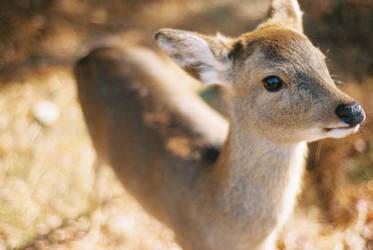 .bambi