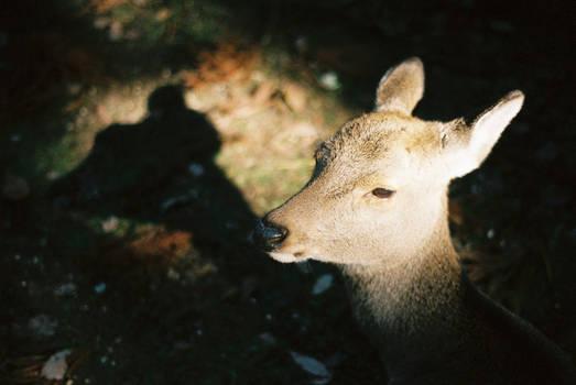 .bambi headlights