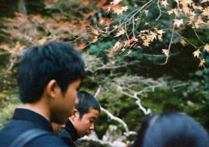 .leaves