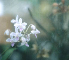 .tiny orchids