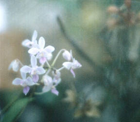 .tiny orchids by dippedFEATHER