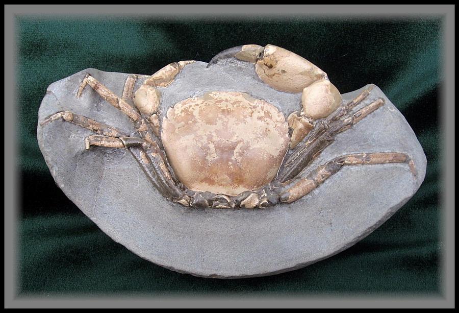 SR Fossil: Neopilumnoplax by paleoichneum