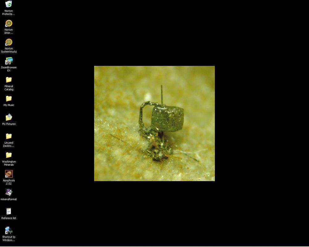 Screenshot 12-18-06 by paleoichneum
