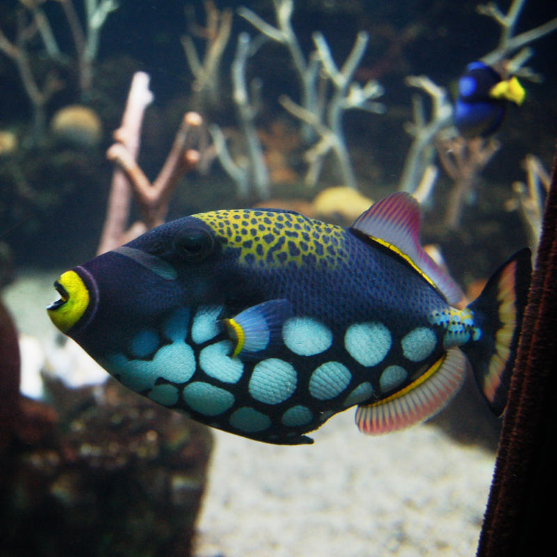 Colorful fish in aquarium by happeningstock on deviantart for Colorful tropical fish