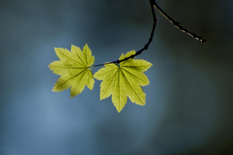 Green Leaves on Branch by happeningstock