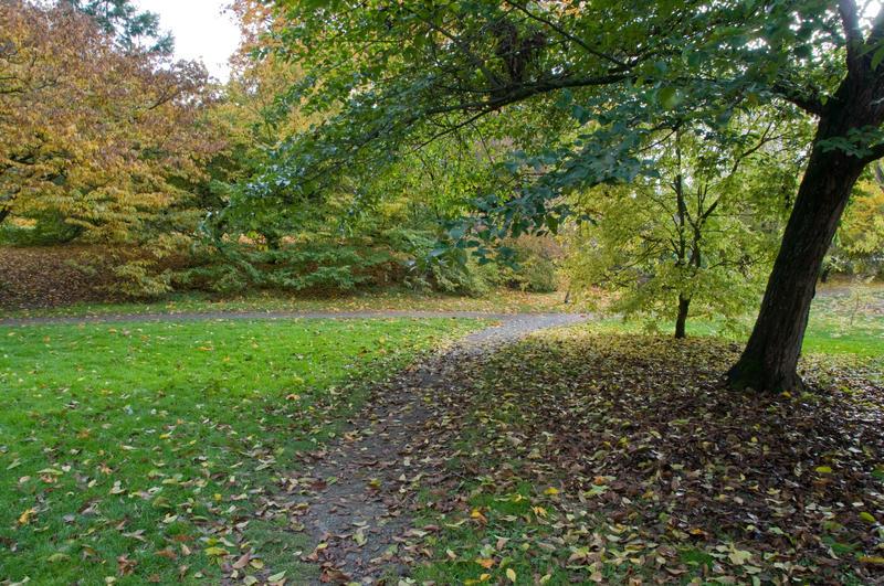 tree path track leaves - photo #16