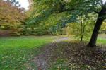Leaves on Path Under Tree