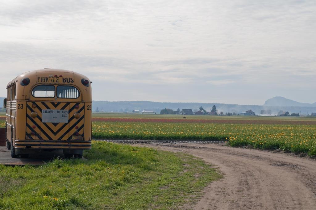 School Bus near Tulip Fields by happeningstock