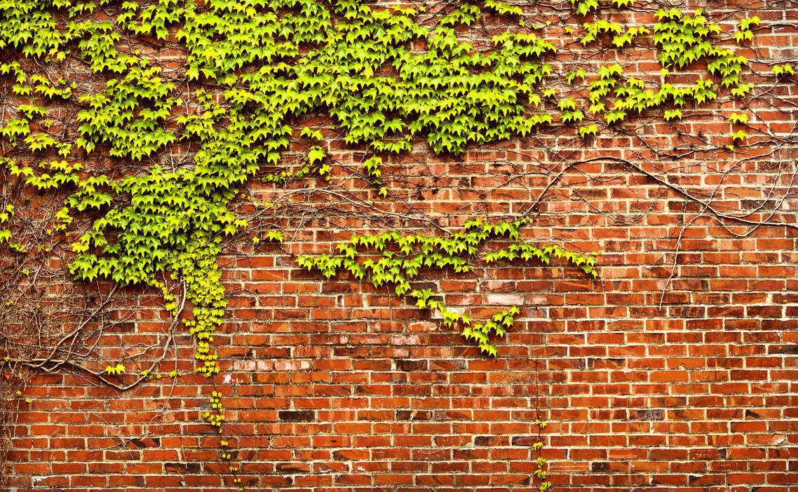 Brick Wall with Ivy Panorama by happeningstock